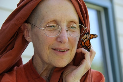 Rare monarch butterfly visits
